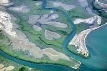 Les États-Unis au secours des mangroves océaniennes
