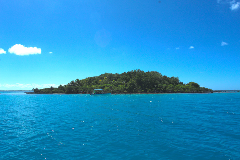 L'approche du motu aux oiseaux ; l'îlot est cerné par une magnifique couronne de madrépores en pleine santé. On distingue, dominant les cocotiers, le feuillage des Pisonia grandis.