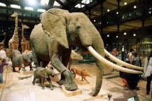 Un voleur s'attaque à la tronçonneuse à l'éléphante de Louis XIV
