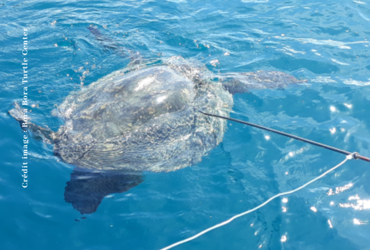 Une tortue transpercée d'une flèche en inox.