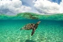 En plein océan, le laboratoire naturel de l'atoll d'Aldabra