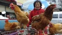 Nouveau décès en Chine dû au virus de la grippe aviaire H7N9