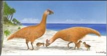 Une reproduction du sylviornis de Nouvelle-Calédonie.