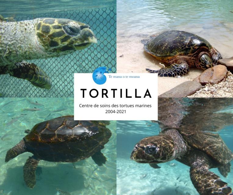 Te mana o te moana : La tortue Tortilla n'est plus