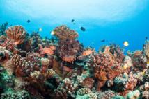 Le corail polynésien est globalement préservé