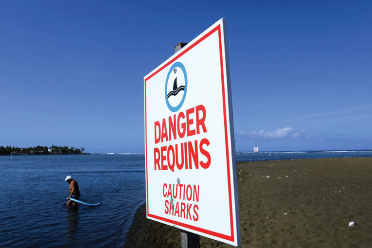 La Réunion: des écoles de surf rouvrent, huit ans après des attaques de requins
