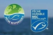 """Nombre de pêcheries abusivement labellisées MSC """"pêche durable"""""""