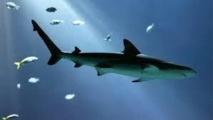 Les requins fuient la pleine lune au fond des mers