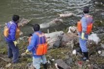 Mort inexpliquée de centaines de porcs et de chiens en Chine