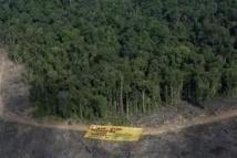 Déforestation en Indonésie: une minière canadienne suscite l'émoi