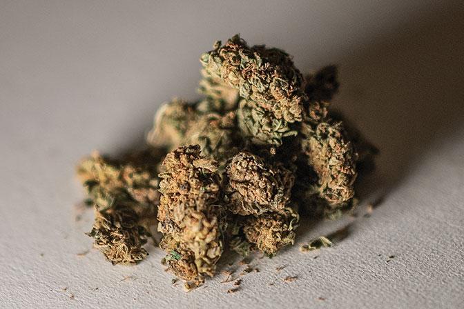 """""""Cannabis récréatif"""" : une légalisation plébiscitée par une large consultation citoyenne"""