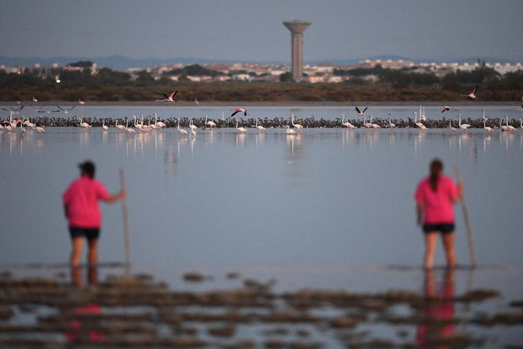 Environ 20% des espèces sont menacées en France, la situation se dégrade (UICN)