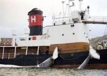 L'Islande reprendra sa campagne de pêche du rorqual en juin