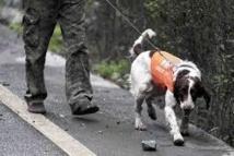 En Chine, des chiens pour prédire les séismes