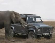Kenya: une responsable d'ONG protégeant les éléphants arrêtée en possession d'ivoire