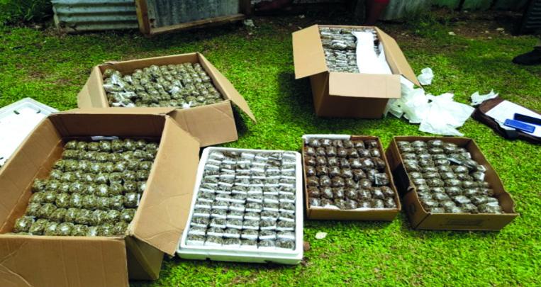 Saisie de 40 kg de cannabis et 9,5 millions en espèces