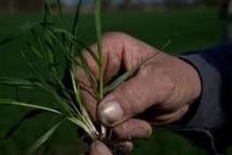 Appel à projets pour encourager les agriculteurs à se mettre à l'agroécologie