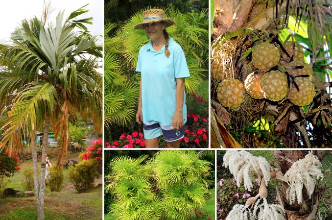Patricia Frébault fut notre guide dans le vaste monde des palmiers. Elle en cultive une cinquantaine d'espèces, dont de très rares, à Puunui où elle réside.