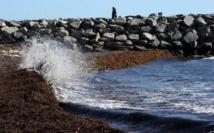 L'Australie veut faire interdire la fertilisation des mers au sulfate de fer