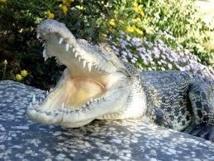 Indonésie: un crocodile lézarde sur une plage, faisant fuir les baigneurs
