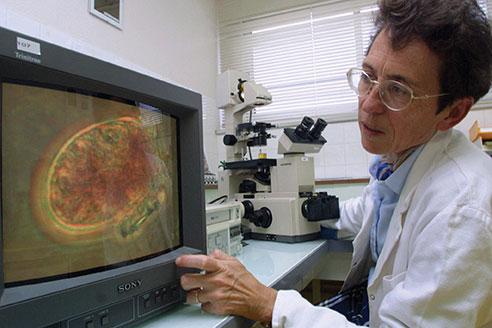 Une microalgue toxique pour l'homme, aussi nuisible aux huîtres et poissons