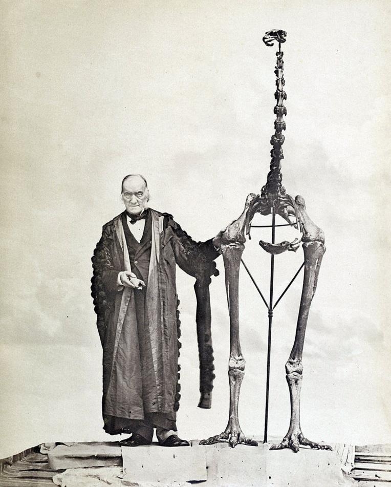 C'est à un scientifique britannique, travaillant dans son laboratoire de Londres, que l'on doit la découverte, en 1839, du premier moa dont les Européens ignoraient à peu près tout auparavant.