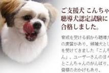 Japon: des biscuits pour chiens... à base de baleine