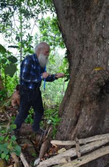 """Pour déterminer l'âge, les chercheurs ont prélevé des échantillons à l'aide d'une foreuse permettant de retirer des carottes de 5 mm de diamètre. Il s'agit ensuite de compter les """"cernes"""" d'arbres en laboratoire."""