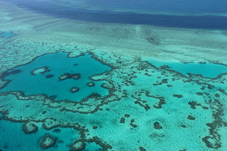 """Australie: des techniques pour """"ralentir de 20 ans"""" la disparition de la Grande barrière de corail"""