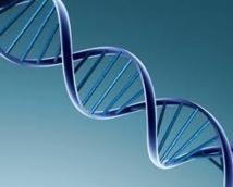 L'ADN humain naturel ne peut pas être breveté