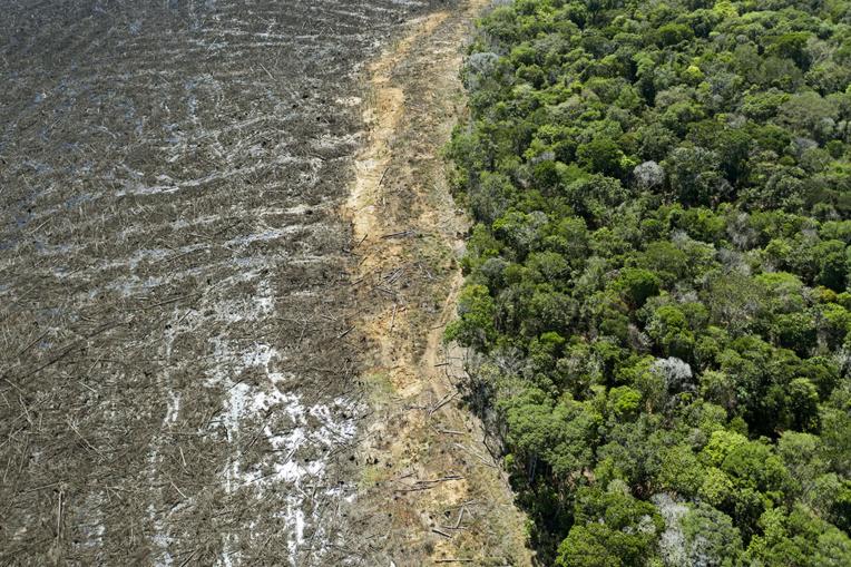 Brésil : déforestation record en Amazonie en avril