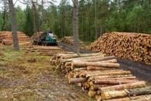 La filière forêt-bois prête à créer 25.000 emplois d'ici 2020