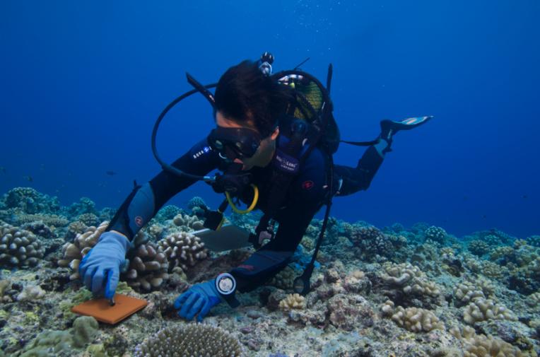 50 ans du Criobe, pionnier de la recherche sur les récifs coralliens