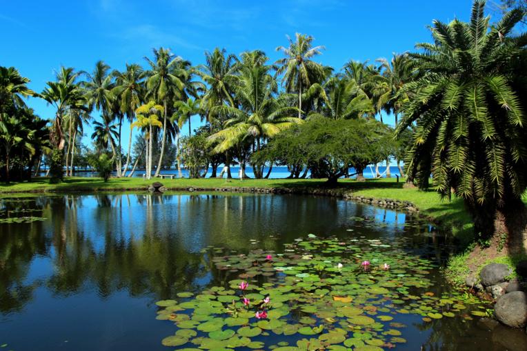 Une vue partielle du jardin botanique aujourd'hui sous la responsabilité du Service du Tourisme.