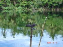 Patrimoine mondial : l'UNESCO modifie le statut des îles salomonaises Rennell