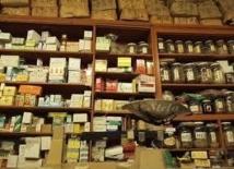 Chine: les herbes médicinales polluées par les pesticides