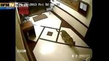 Inde: un léopard filmé en train de chasser... dans un immeuble de Bombay
