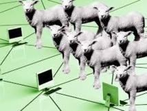 Colliers GPS, téléguidage de troupeaux: les Pyrénées testent le pastoralisme du futur