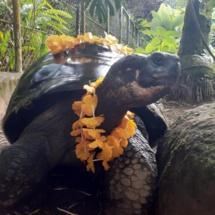 page enfant : En savoir plus sur les tortues