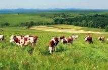 Dix pistes pour réduire l'impact de l'agriculture sur le climat