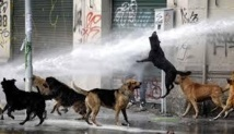 Quelque 500.000 chiens errants dans les rues de Santiago du Chili