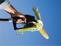 Premier pas vers la limitation de la production d'agrocarburants dans l'UE