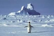 Pas d'aires marines protégées en Antarctique