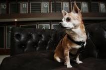 Vienne: l'hôtel de luxe Sacher propose des chambres ... pour les chiens