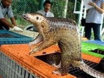 Lancement d'un inventaire trimestriel des animaux braconnés