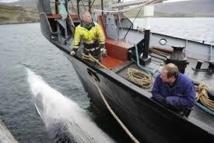 Islande: retour à la case départ pour 130 tonnes de viande de rorqual