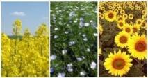 """Inquiétudes en France autour du développement d'""""OGM cachés"""""""