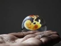 Le Conseil constitutionnel valide le texte autorisant la recherche sur l'embryon