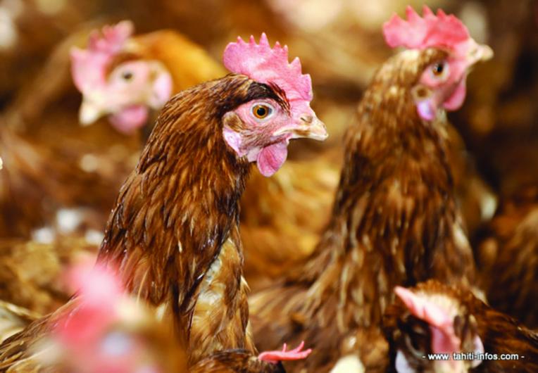 Les œufs de poule classifiés