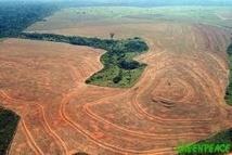 En Amazonie, Sao Felix do Xingu tourne la page de la déforestation